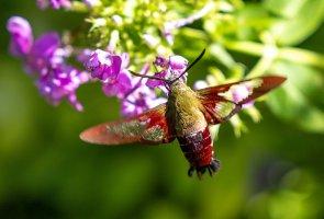 HB Moth--2.jpg