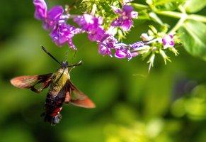 HB Moth--3.jpg