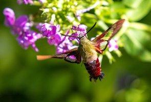 HB Moth-7764.jpg
