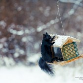 Samples 27 168x168 - Review: Canon EF 100-400mm f/4.5-5.6L IS II