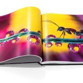 PDKP0040 168x168 - Kickstarter: Macro Photography: The Universe at our Feet