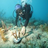 reef 168x168 - Canon Participates in the University of Miami's Coral Reef Restoration Project