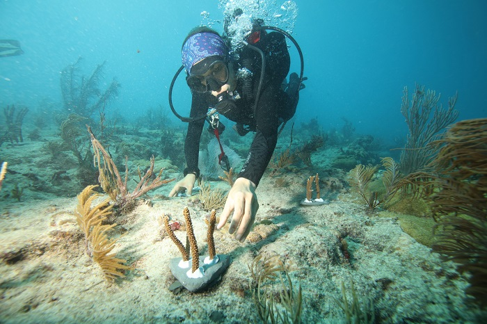 reef - Canon Participates in the University of Miami's Coral Reef Restoration Project