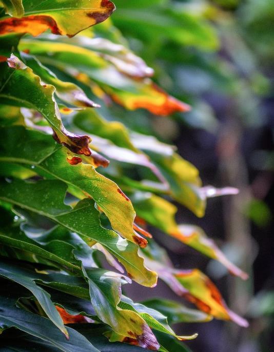a group of colorful leaves description automatica - Zhong Yi Optics announces the Mitakon 135mm f/2.5 APO Portraits Lens for RF